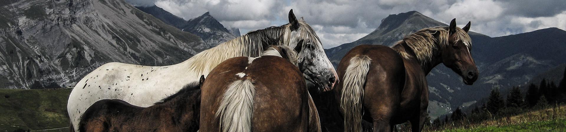 bandeau_equitation.jpg